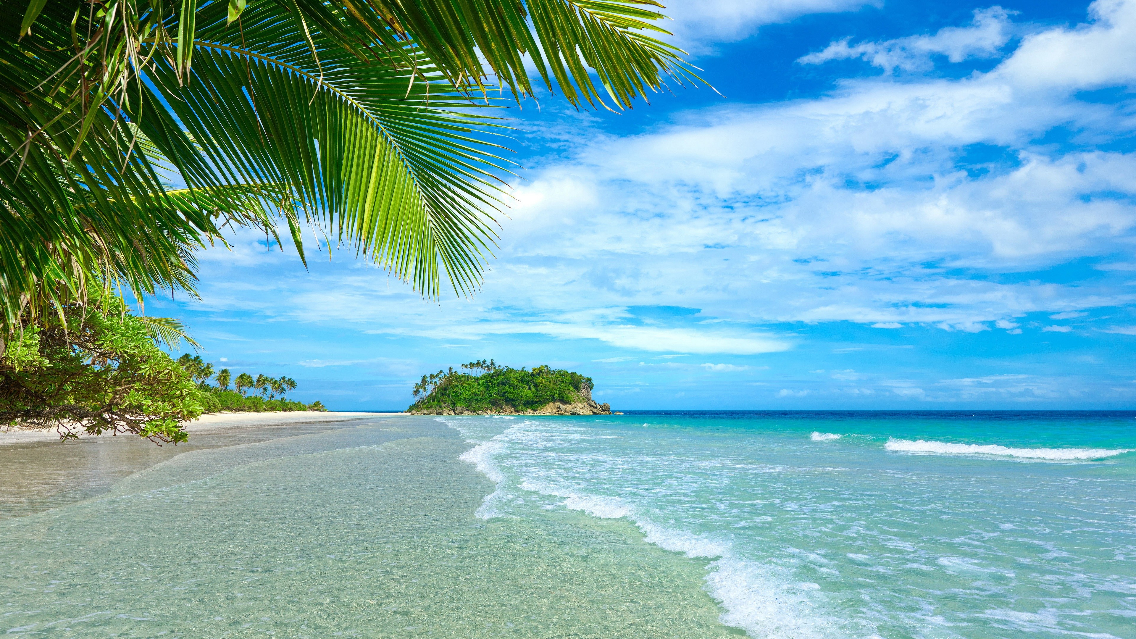 Awesome Tropical Beach 4k Hd Desktop Wallpaper For 4k: 4K Palm Trees Wallpapers High Quality