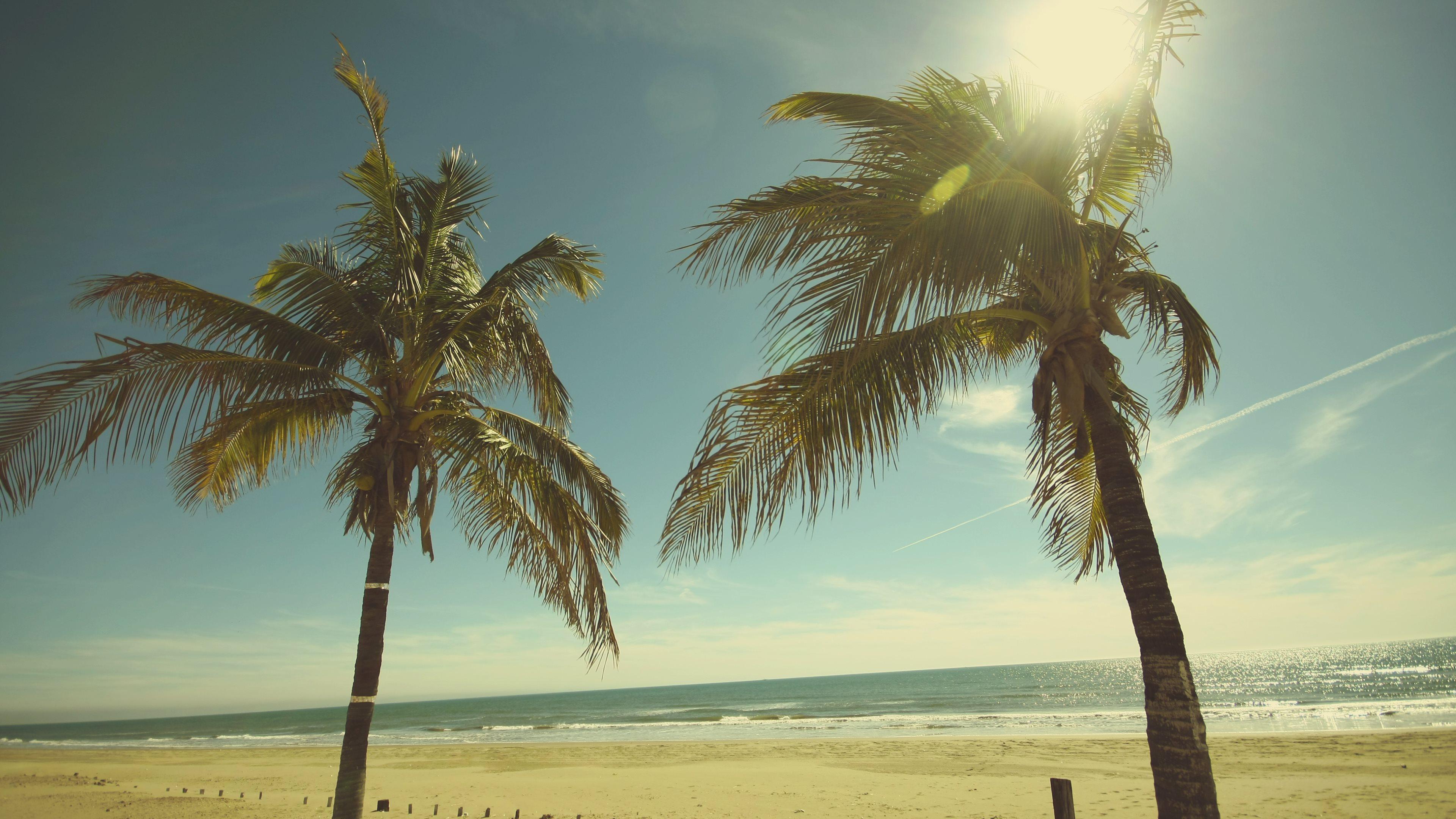 Amazing Wallpaper Macbook Palm Tree - 4K-Palm-Trees-Wallpaper-Full-HD1  Photograph_32072.jpg