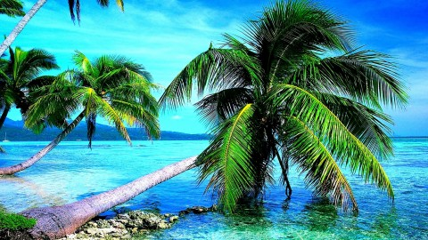 4K Palm Trees wallpapers high quality