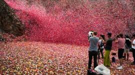 4K Petals Photo Free