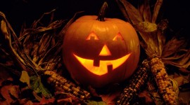 4K Pumpkin Photo Download