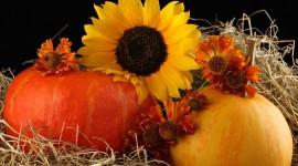 4K Pumpkin Pics