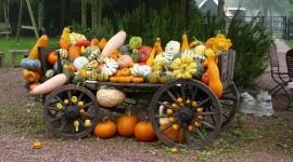 4K Pumpkin Wallpaper Background