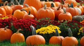 4K Pumpkin Wallpaper Download