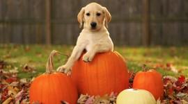 4K Pumpkin Wallpaper Download Free