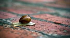 4K Snails Photo