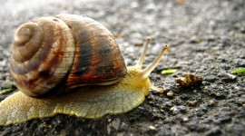 4K Snails Photo Download