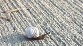 4K Snails Photo Free