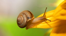4K Snails Photo#1
