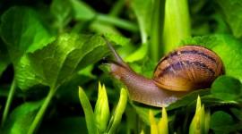 4K Snails Photo#2
