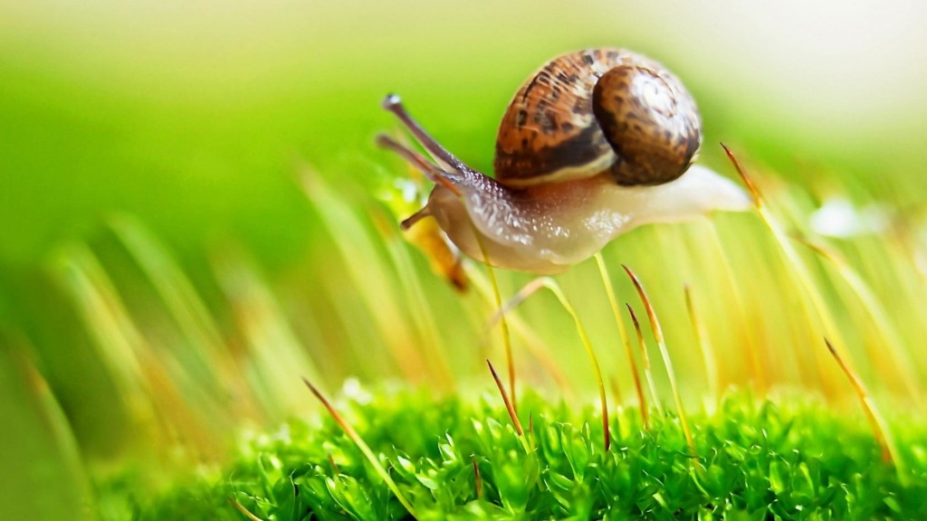 4K Snails wallpapers HD