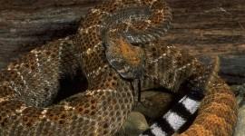 4K Snakes Photo