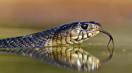 4K Snakes Photo Download