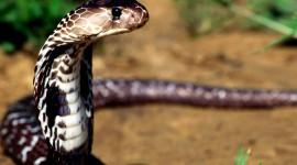 4K Snakes Photo Free