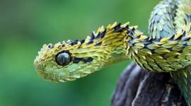 4K Snakes Photo#2