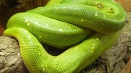 4K Snakes Photo#3