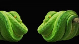 4K Snakes Pics