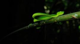 4K Snakes Wallpaper 1080p