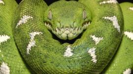 4K Snakes Wallpaper