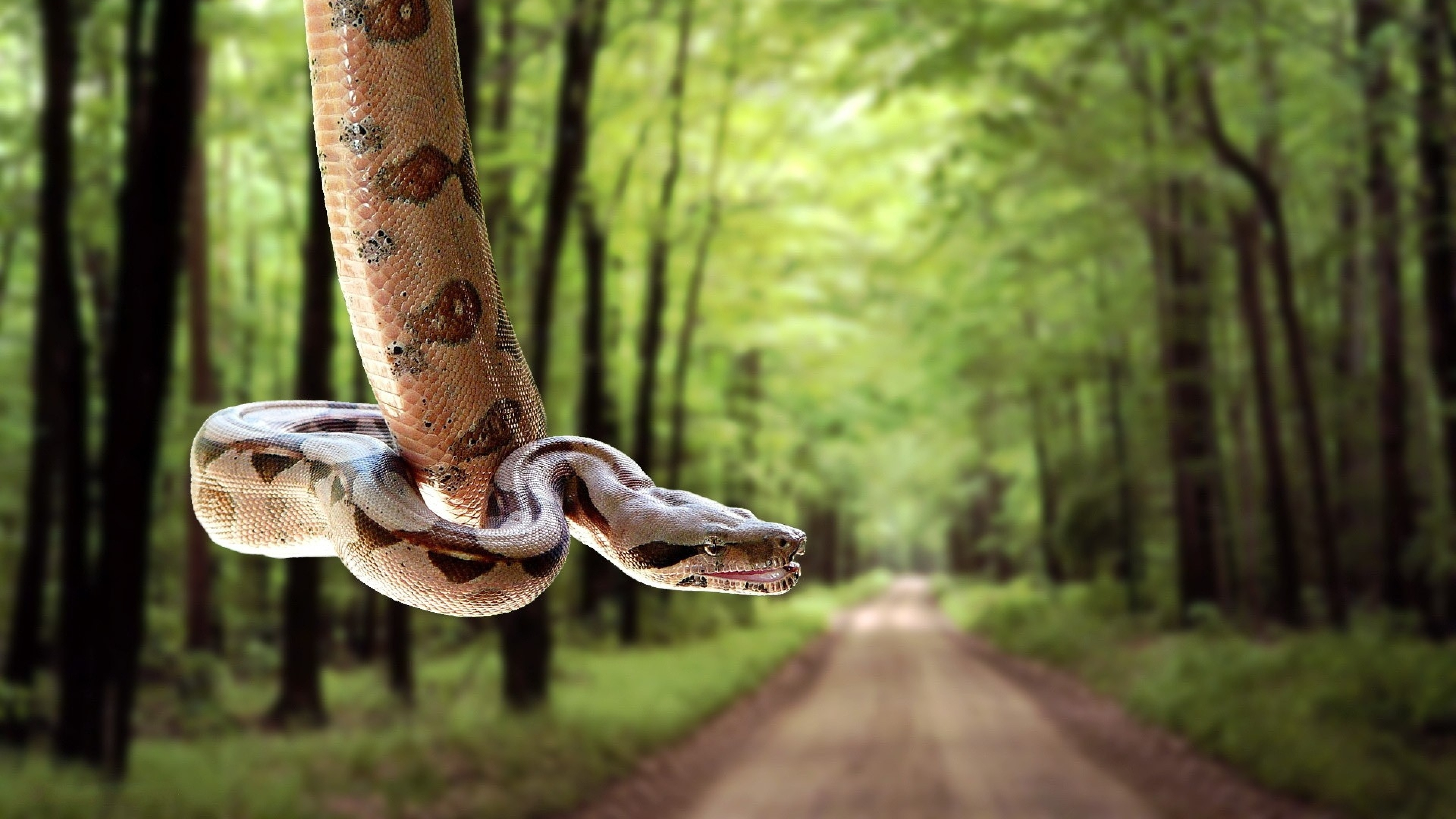 4k snakes wallpapers high quality download free