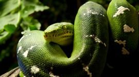 4K Snakes Wallpaper#2