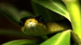4K Snakes Wallpaper#3