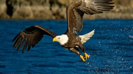 4K The Flight of a Bird Photo Download