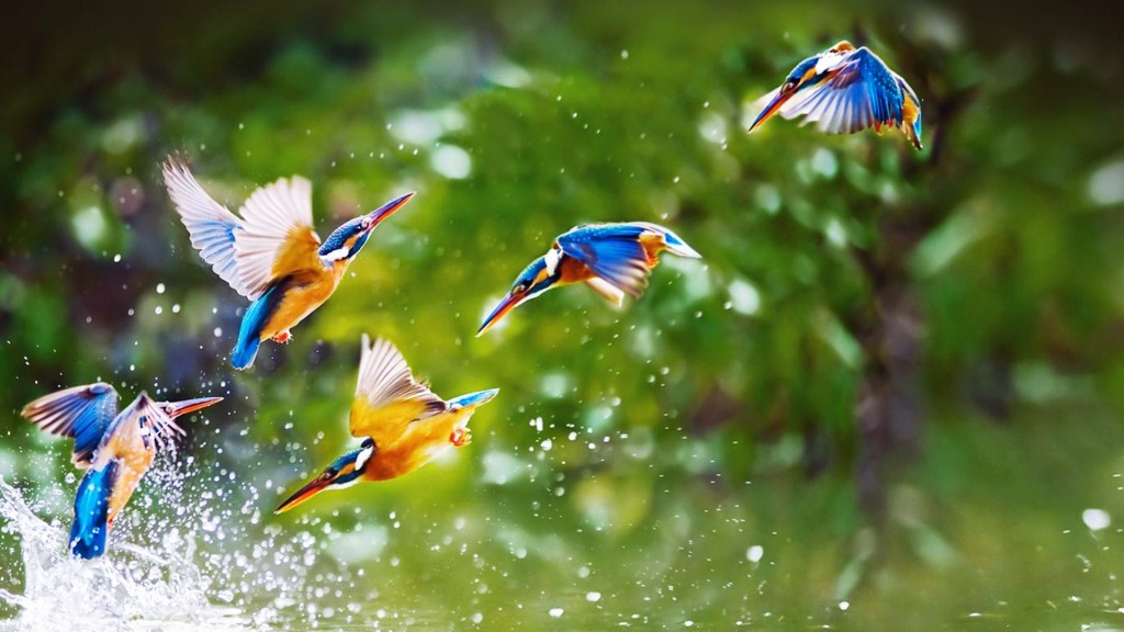 4K The Flight of a Bird wallpapers HD