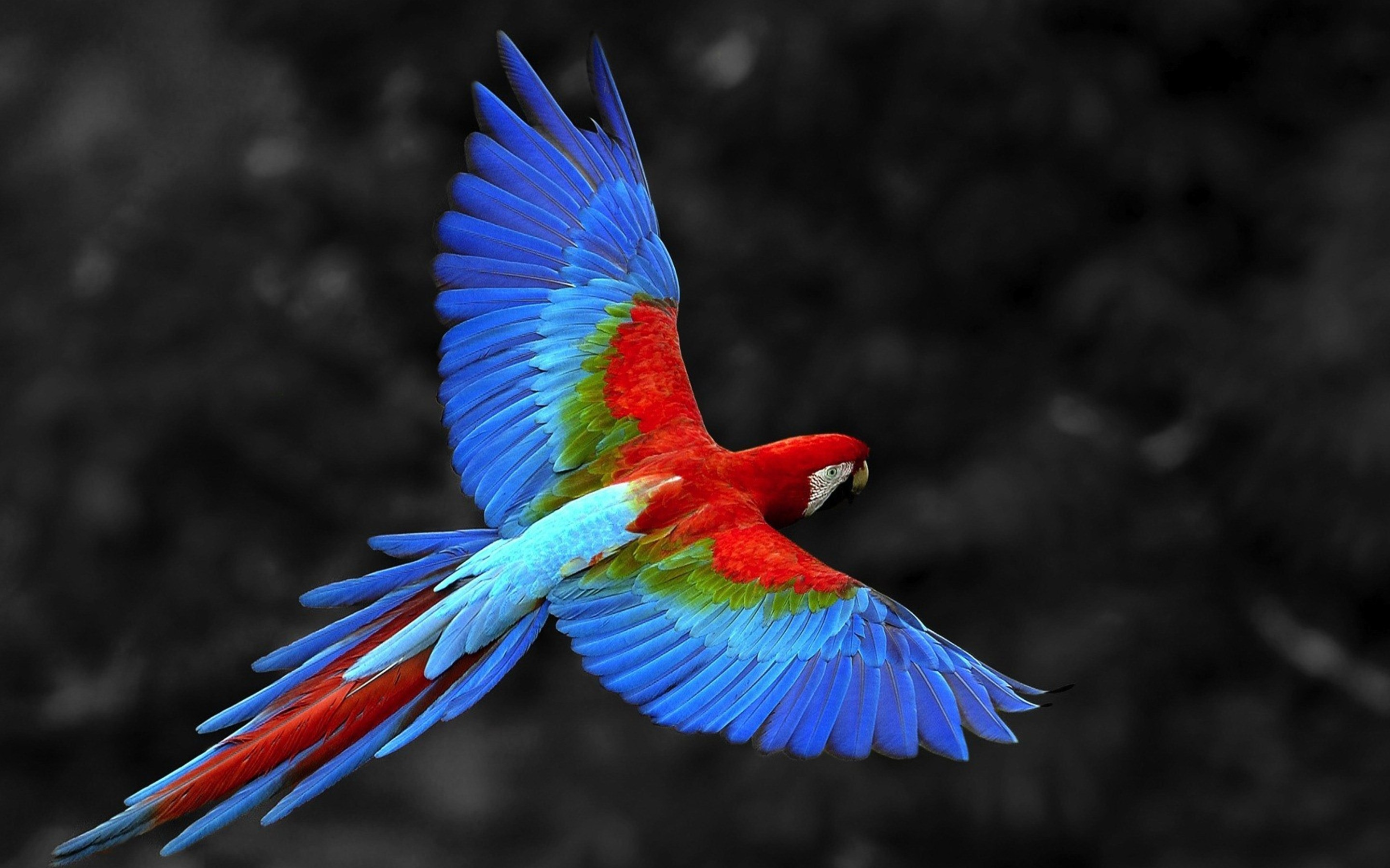 4K The Flight of a Bird Wallpapers High Quality | Download ...