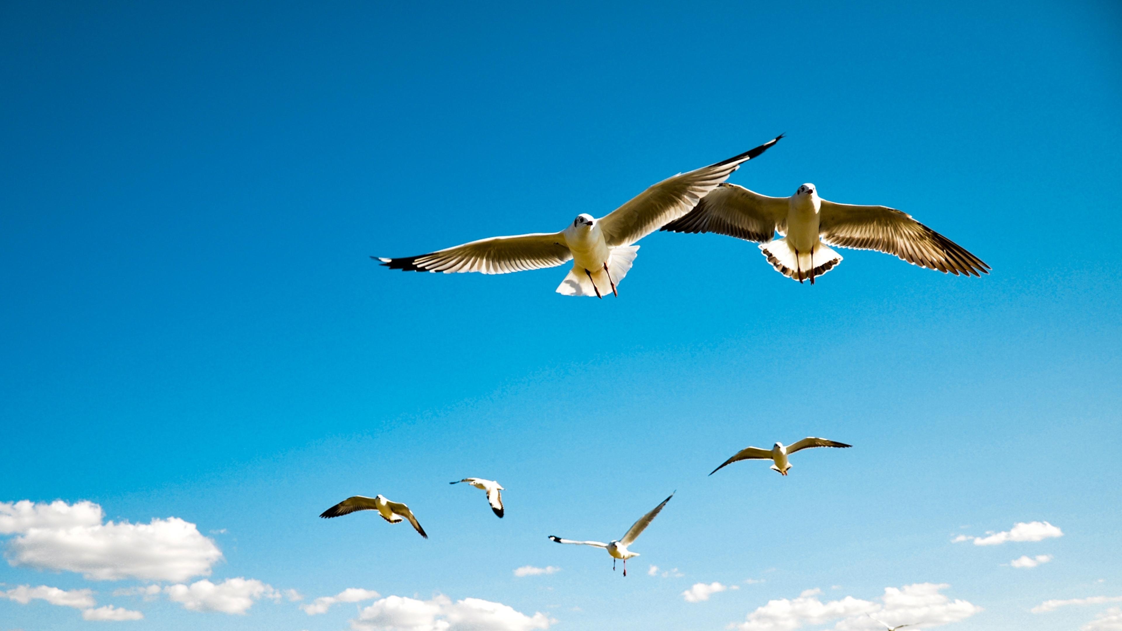 Wallpapers Hd Flying Birds Apple Animals Blue Sky Desktop: 4K The Flight Of A Bird Wallpapers High Quality