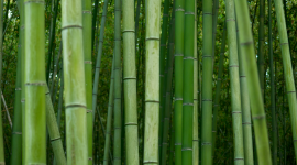 Bamboo Forest Best Wallpaper