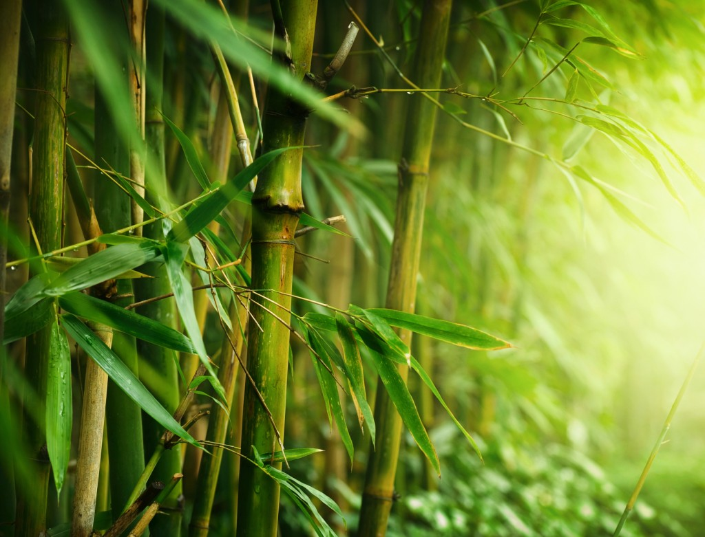 bamboo forest wallpapers high quality | download free