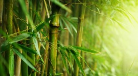 Bamboo Forest Desktop Wallpaper