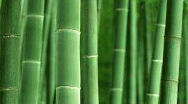 Bamboo Forest Desktop Wallpaper HD