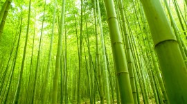 Bamboo Forest High Quality Wallpaper