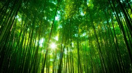 Bamboo Forest Wallpaper Download