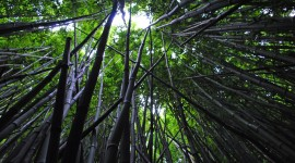 Bamboo Forest Wallpaper Download Free