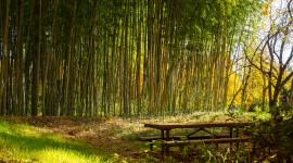 Bamboo Forest Wallpaper For Desktop