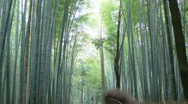Bamboo Forest Wallpaper For IPhone