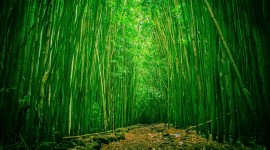 Bamboo Forest Wallpaper Free