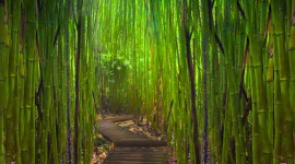 Bamboo Forest Wallpaper Full HD