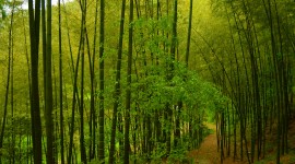 Bamboo Forest Wallpaper Gallery