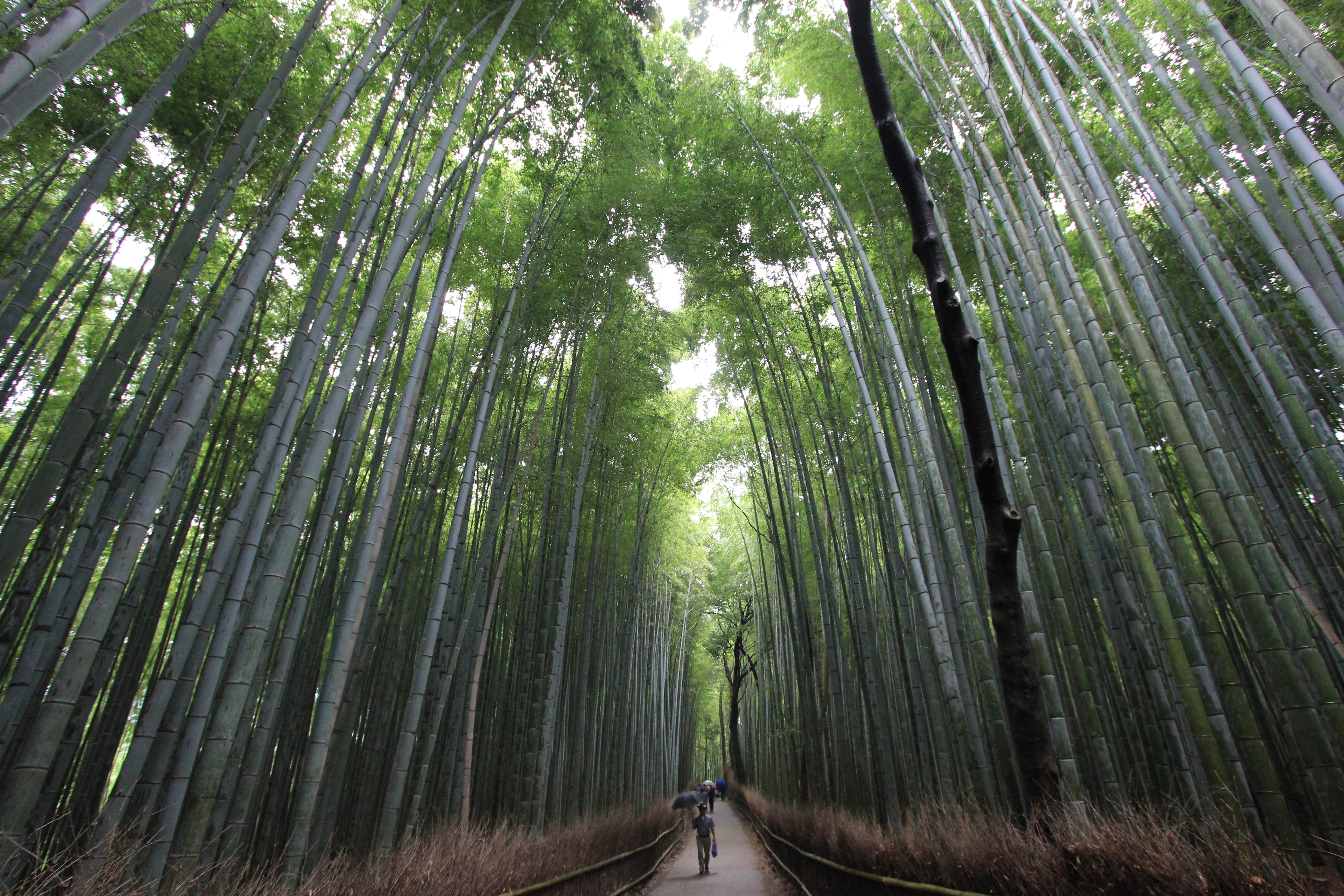Bamboo Forest Wallpapers High Quality Download Free