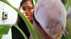 Banana Flower High Quality Wallpaper