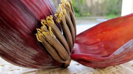 Banana Flower Wallpaper