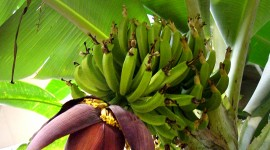 Banana Flower Wallpaper For IPhone Free