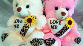 Bear and Love Photo Download