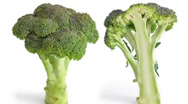 Broccoli Wallpaper