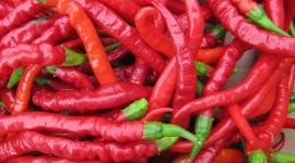 Chili Pepper Wallpaper Gallery
