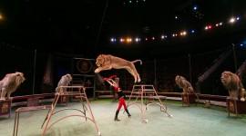 Circus Image Download